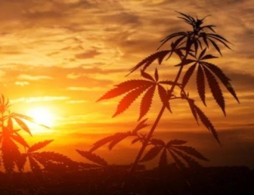 Smoking Herbs Vs Vaporizing Herbs