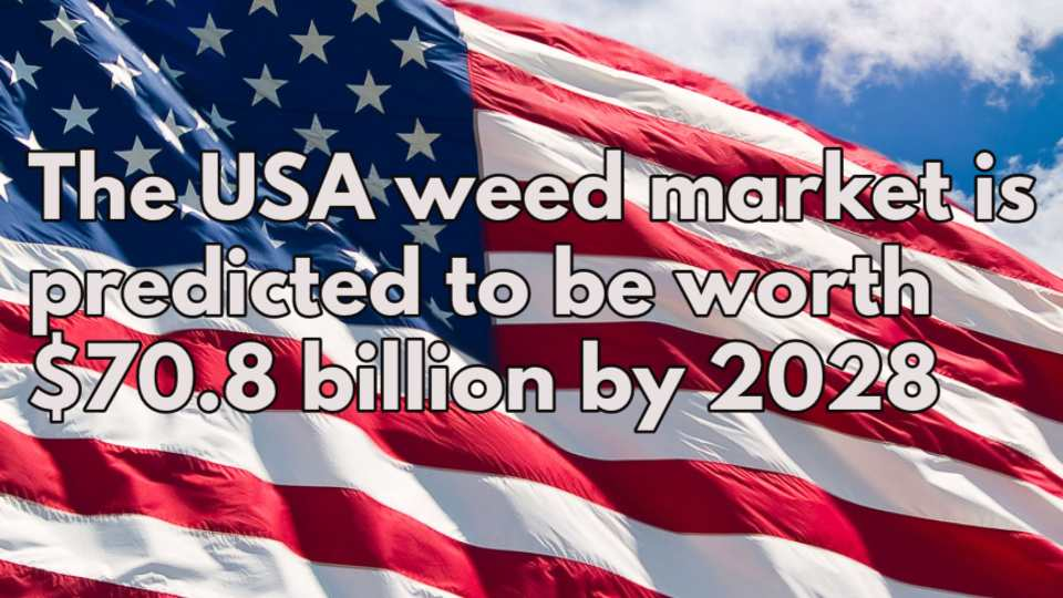 weed stocks
